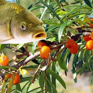 Омега-3,6,7,9 рыба+растения