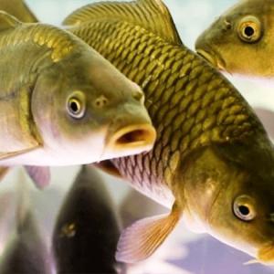 Омега-3 из рыбы